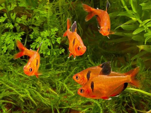 mơ thấy cá