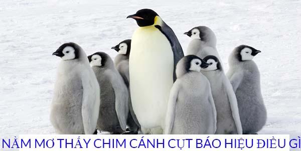 Giải mã giấc mơ thấy chim cánh cụt mang ý nghĩa gì