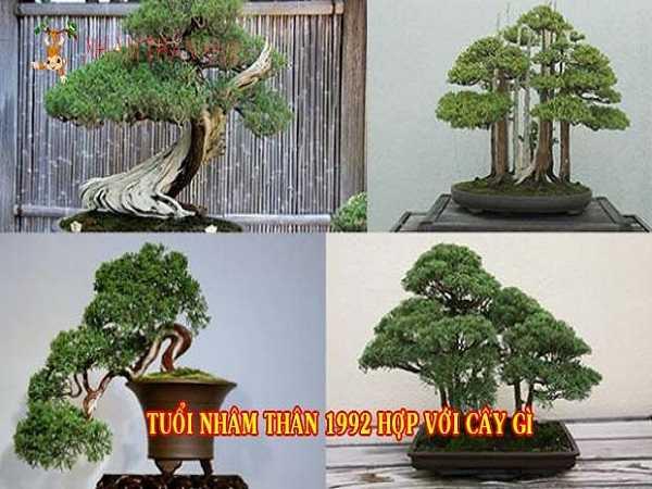 Tìm hiểu tuổi thân hợp cây gì