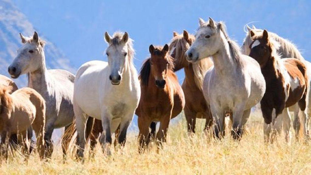 Nằm mơ thấy con ngựa đánh con số gì